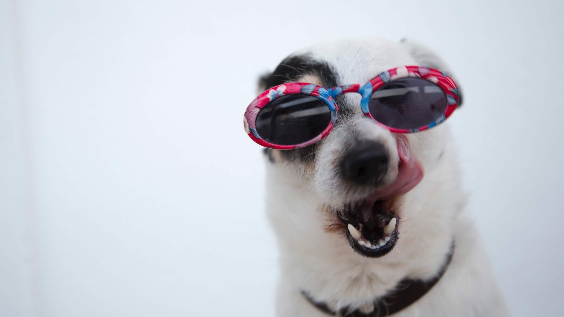 patriotic-pups