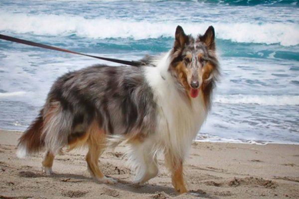 cute-dog-in-the-beach