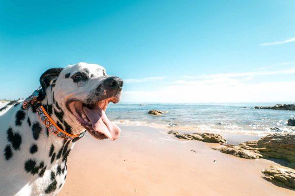 top-7-dog-beaches-in-oregon